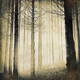 Backlit Tress in the Black Forest, Germany Photographic Print by Doug Armand