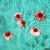 Flowers Floating in Swimming Pool Photographic Print by Henrik Weis