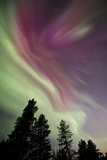 Aurora Borealis above Kiruna, Sweden Photographic Print by David Clapp