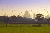 Birds Take Flight near Taj Mahal Photographic Print by Adrian Pope