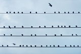 Birds on a Wire. Photographic Print by John Greim