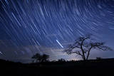 Star Trails and Tree Silhouette Photographic Print by Michael Lawrence Photography