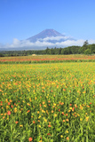 Mount Fuji and Zinnia Flowers, Yamanashi Prefecture Photographic Print by  SHOSEI/Aflo