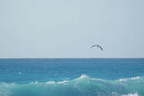 Eagle Flying over Sea Photographic Print by Fabian Jurado's Photography.