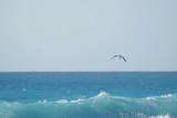 Eagle Flying over Sea Lámina fotográfica por Fabian Jurado's Photography.