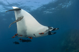 Manta Ray Revillagigedo Photographic Print by Luis Javier Sandoval