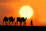 Desert Camel Rides Photographic Print by Amateur photographer, still learning...