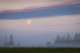 Usa, Oregon, Marion County, Hop Field at Sunrise Photographic Print by Gary J Weathers