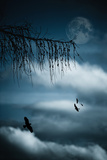 Composition with Tree, Moon, Clouds and Birds Photographic Print by Andreas Schott (Bonnix)