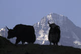 Two Mountain Goats Silhouetted, Focus on Breithorn Mountain in Background Photographic Print by Gerhard Fitzthum
