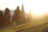 Sun Washed Mountain Meadow Photographic Print by Guy Crittenden