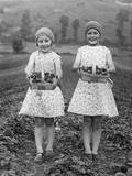 Pair of Punnets Photographic Print by  Burchell