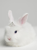 White Bunny Rabbit Wearing Tiara, close Up, Studio Shot Fotografisk tryk af Roger Wright