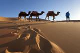 Tuareg Man Camels & Dunes, Sahara Desert, Morocco Photographic Print by Peter Adams