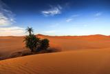 Oasis on Desert Photographic Print by Copyright Mark Keelan