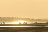 African Elephants at Sunset Fotografisk tryk af Richard Packwood