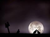 Moon with Love Pigeon Photographic Print by mhd hamwi