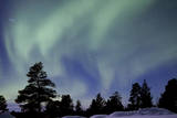 Northern Lights over Trees Photographic Print by Richard McManus