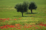 Tuscany 2008 Photographic Print by Ingmar Wesemann