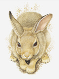 Illustration of a Wild Rabbit (Oryctolagus Cuniculus) Photographic Print by Dorling Kindersley