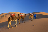 Tuareg Camel Train, Sahara Desert, Morocco Photographic Print by Peter Adams