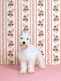 Puppy Series Photographic Print by Catherine Ledner