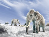 Woolly Mammoths, Artwork Photographic Print by Science Photo Library - LEONELLO CALVETTI