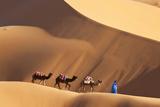 Camels & Dunes, Erg Chebbi, Sahara Desert, Morocco Photographic Print by Peter Adams