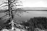 Usa, Wyoming, Grand Teton Np, Jenny Lake, Dead Tree (B&W) Photographic Print by Guy Crittenden