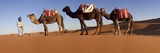 Tuareg Camel Train, Sahara Desert, Morocco Fotografie-Druck von Peter Adams