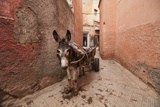 Donkey in Medina Photographic Print by Dave Stamboulis Travel Photography