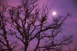 Christmas Morning Moon Photographic Print by Jeff R Clow