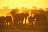 ELEPHANT HERD (Loxodonta Africana), CHOBE NATIONAL Park, BOTSWANA Photographic Print by Theo Allofs