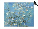 Ramas de almendros en flor, Saint Rémy, c.1890 Láminas por Vincent van Gogh