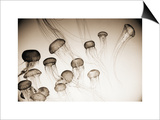 Jellyfish in Motion 4 Prints by Theo Westenberger