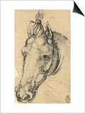 Study of the Head of a Horse, Pen Drawing on Paper Turned Yellow, Royal Library, Windsor Print by  Leonardo da Vinci