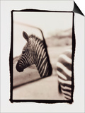Zebra in the Mirror 1 Poster by Theo Westenberger