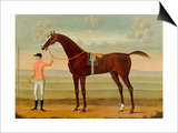 A Bay Racehorse with his Jockey on a Racecourse Poster by Daniel Quigley