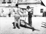 Two Men Carrying a Freshly-Caught Tuna. Palermo Poster