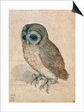 Sreech-Owl, 1508 Prints by Albrecht Dürer