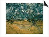 Olive Trees Posters by Vincent van Gogh