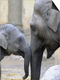 Four Month Old Elephant and Her Mother are Pictured in Hagenbeck's Zoo in Hamburg, Northern Germany Posters