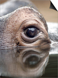 Eye of Hippo at Season Opening of Zoom Erlebniswelt Adventure Park in Gelsenkirchen, Germany Prints
