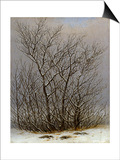 Bushes in the Snow Prints by Caspar David Friedrich