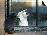 Separated by a Pane of Glass, a White Cat Tries to Play with a Black Cat Prints