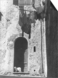 Cat and Laundry Hanging on a Street in Siena Print by Vincenzo Balocchi