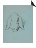Etude de tête de cochon Art by Thomas Couture