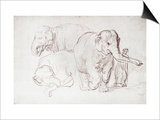 Three Elephants Posters by  Rembrandt van Rijn