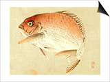 Bairei Gadan - Red Snapper Prints by Bairei Kono