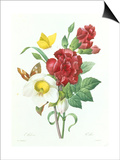 Botanical Study of Hellebore Posters by Pierre-Joseph Redouté